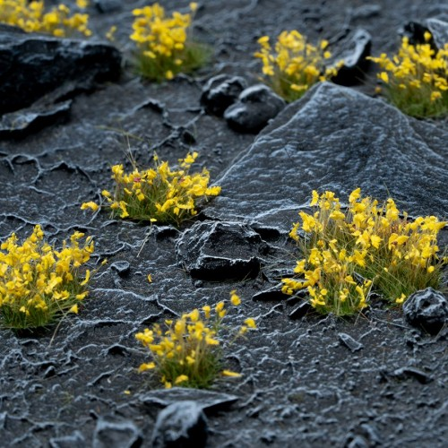 yellow-flowers-tufts