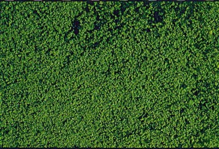 Heki 1602 microflor foliage darkgreen