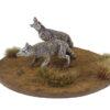 coyotes1