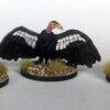 vulturesweb